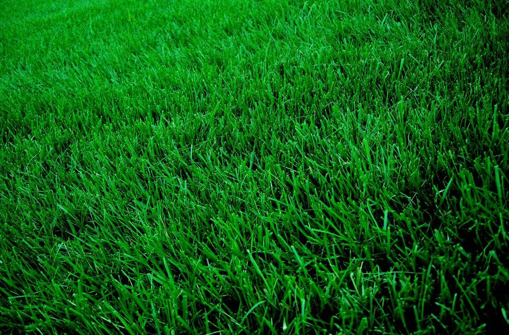 Zöld gyep egész évben: A 6 legfontosabb kora tavaszi teendő