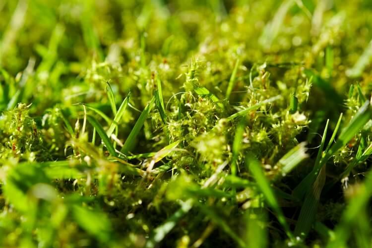 7 módszer, amivel hatékonyan kiirthatod a mohát a gyepedből