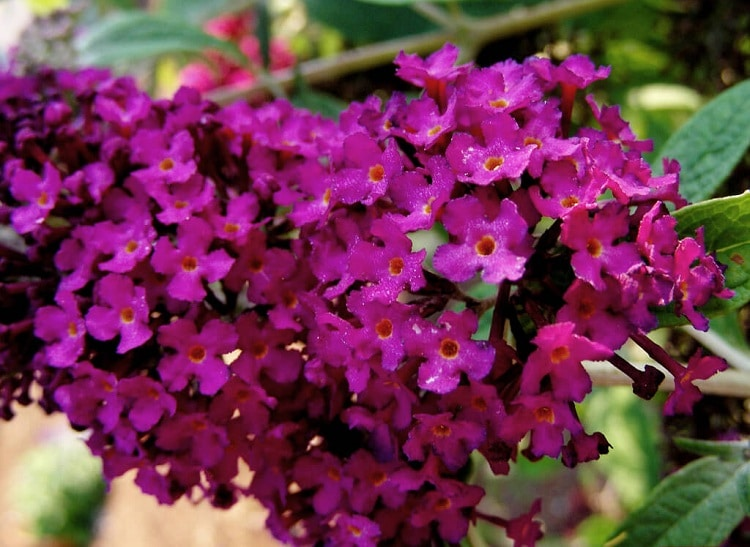 növény virágai