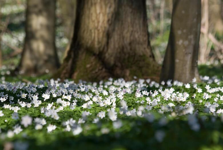 4 talajtakaró növény, melyekkel kerted árnyékos része is gyönyörű zöld szőnyeggé válik
