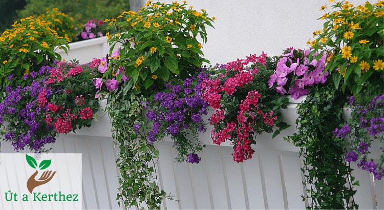 Balkonnövények: Így varázsolj pici erkélyedből gyönyörű kertet