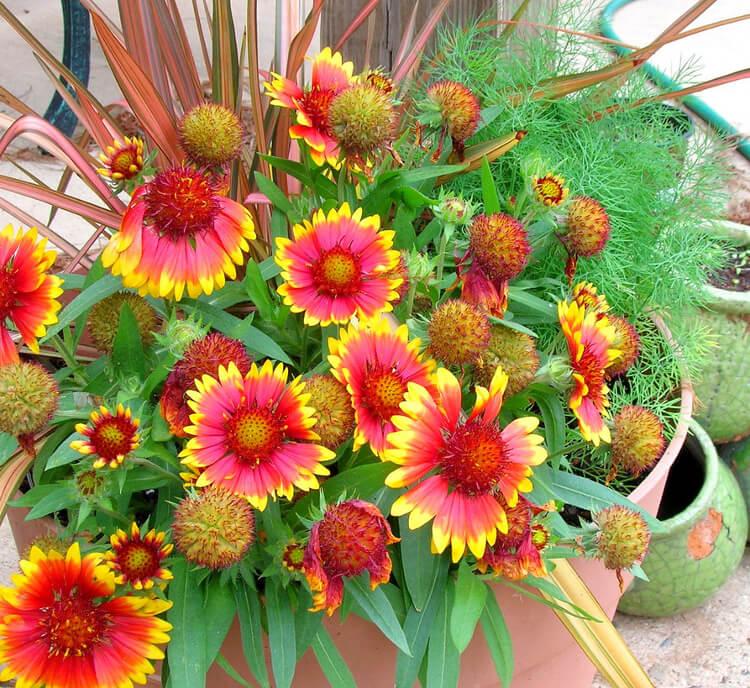 élénk virágokkal teli