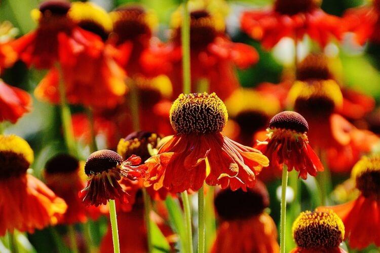 kasvirág képek