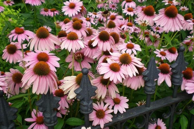 kasvirágok