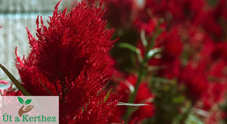 10 növény, amelyekkel tiéd lesz az utca legszebb előkertje
