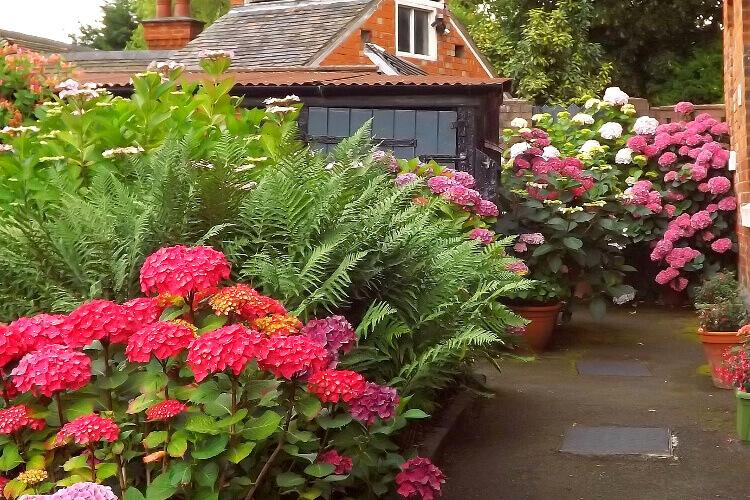 savanyú talajt kedvelő növények