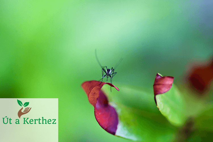 Szúnyogmentes otthon könnyedén: A 8 legjobb szúnyogriasztó növény
