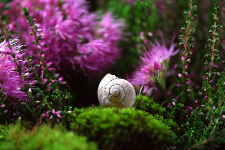 Érzékek Kertje: A kert, amely mind az 5 érzékedre hatni fog