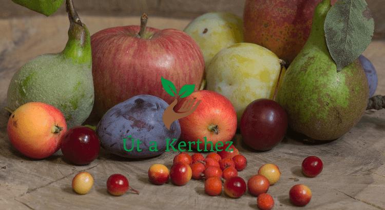 Törpe gyümölcsfa az erkélyre – a kiválasztástól a gondozásig