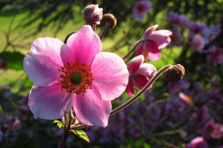 7 növény, amik színessé varázsolják az őszi hónapokban a kertedet