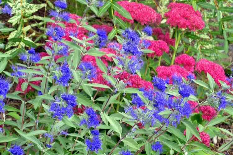 őszi növények a kertben