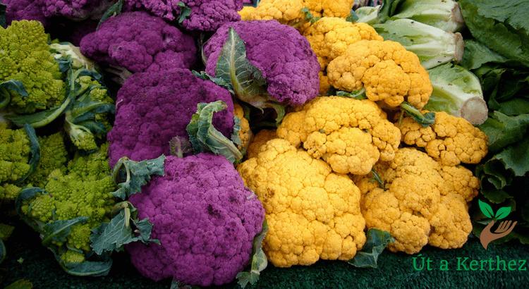 Láttad már kedvenc zöldségeid fura, színes kiadásait?