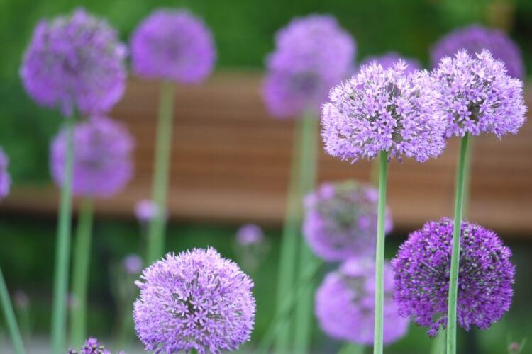 kora nyári virágok
