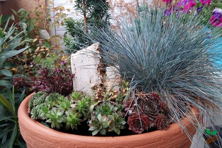 A legjobb örökzöld növények erkélyre – és segítség a gondozásukhoz