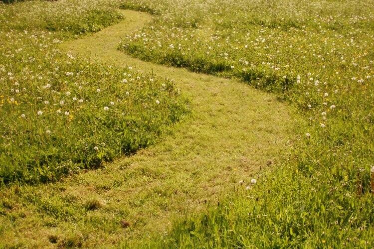 út a fűben