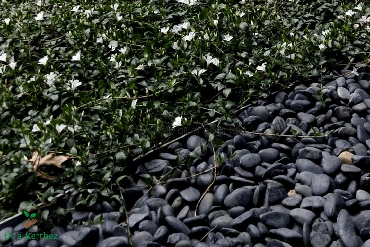talajtakarás