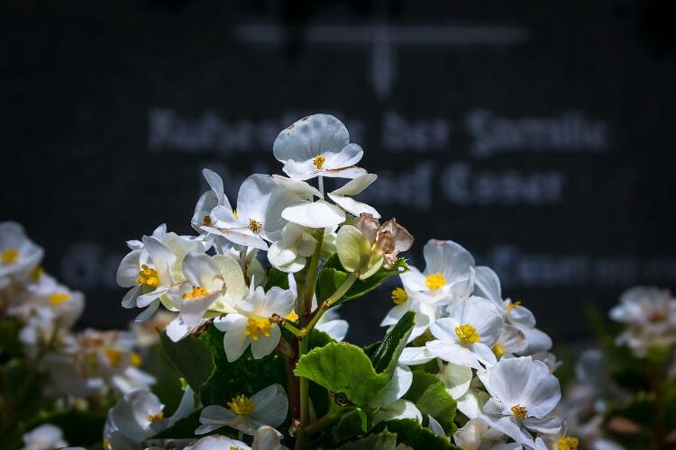 temetőbe illő növények - főkép