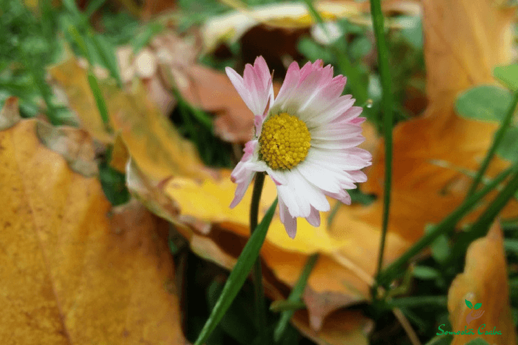 virág a kertben ősszel