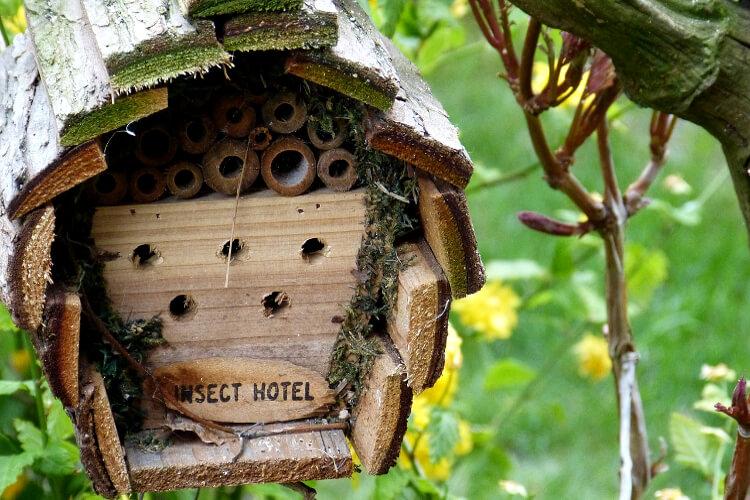 hasznos rovarok