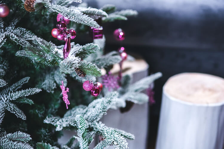 Fenyőfajták karácsonyra – Tudd meg, melyik illik legjobban hozzád