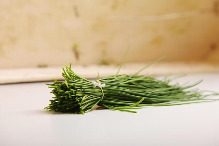 10 fűszernövény, amik kerted árnyékosabb részeit is kedvelik