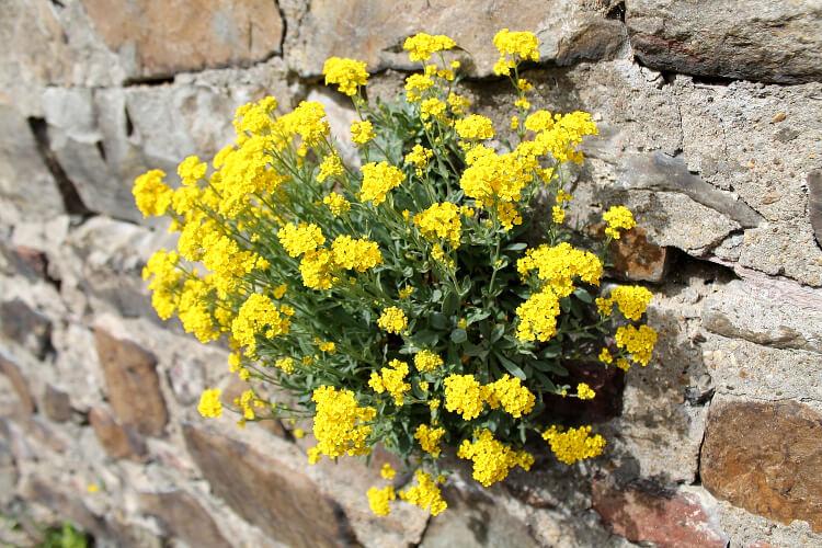 8 támfal növény, ami a legsivárabb falat is mutatóssá teszi