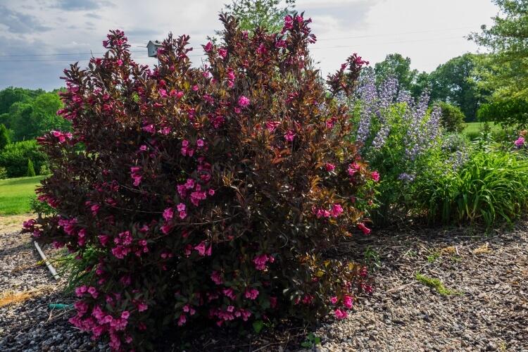A bordó növények, melyek remekül mutatnának kertedben [Részletes lista]