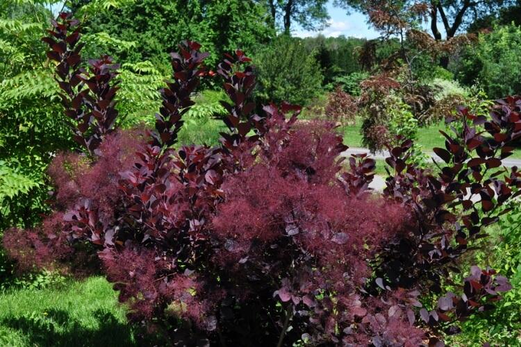 Hogyan használd a bordó növényeket a kertben (7 profi megoldás)