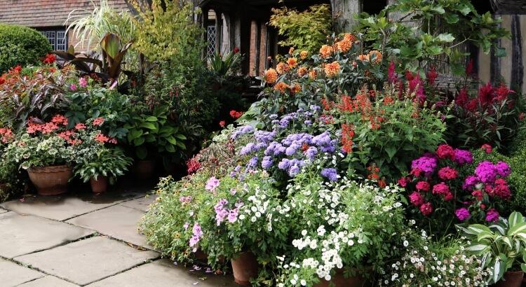 Hogyan változtasd leburkolt bejáródat virágzó előkertté (ízlésesen)