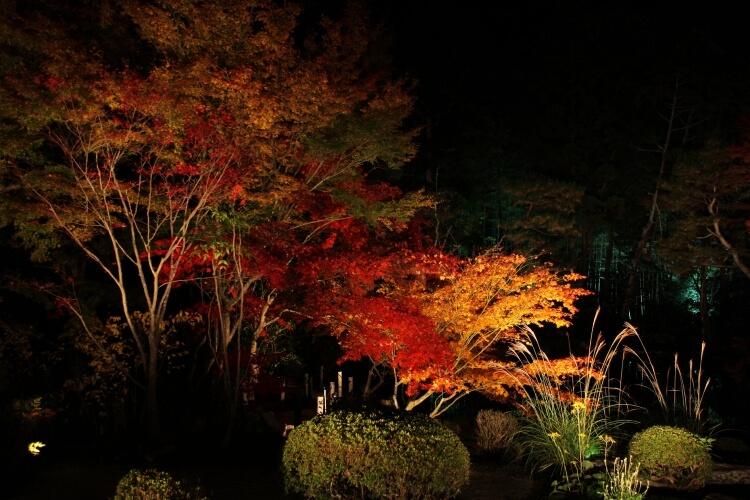 Hova helyezd a kerti világítást, hogy a legnagyobb hatást érd el (képekkel illusztrálva)