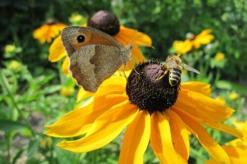 lepke és méh