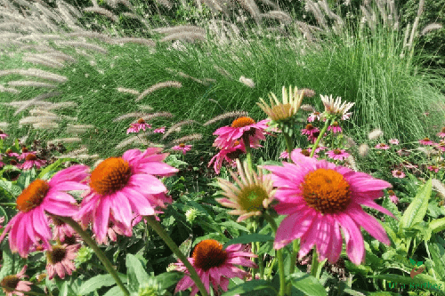 lepkecsalogató növények