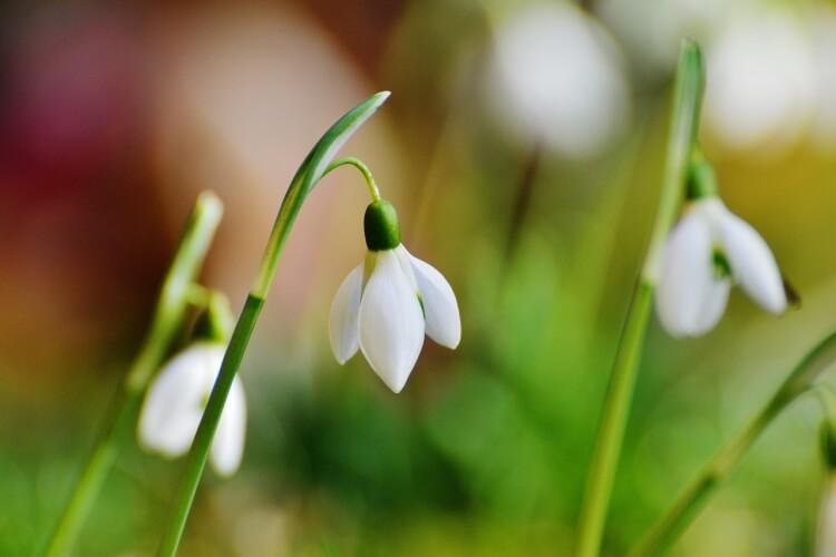 tavaszi hagymás