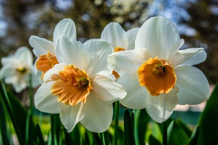 tavaszi virágok