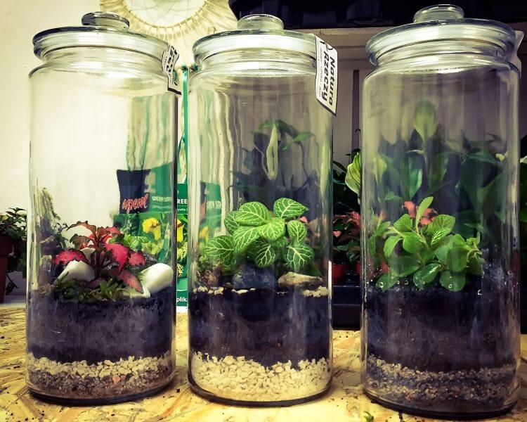 floráriumba való növények