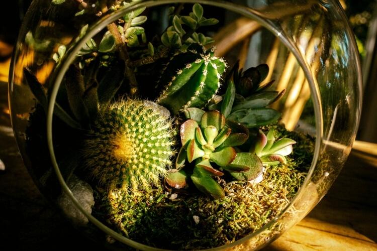 kaktuszok - pozsgások