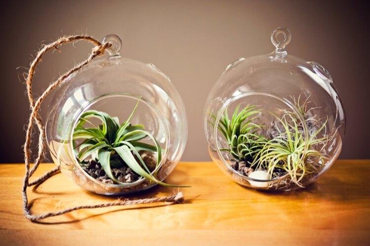 levegőből táplálkozó növények