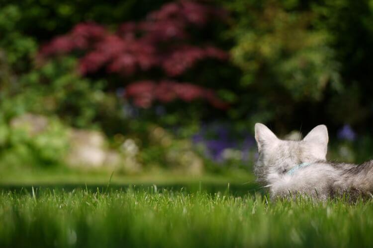 szép fű