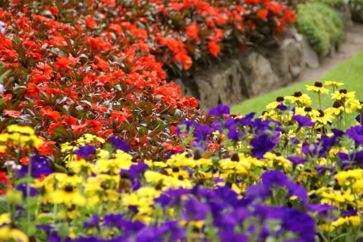 színes virágok