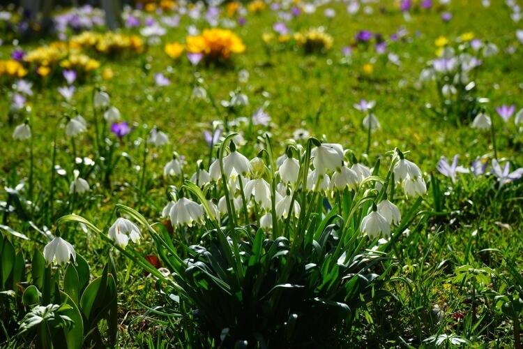 Ezek a növények borítják virágba márciusban a kerteket, balkonokat