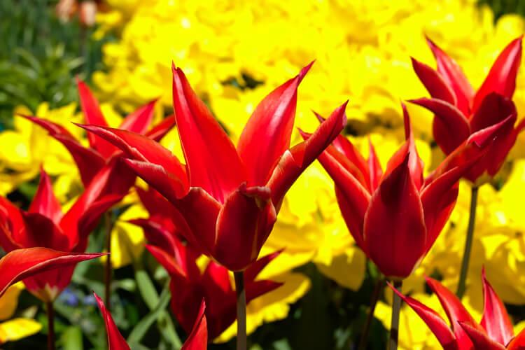 Boldogságot sugárzó kompozíciók pirosból és sárgából (növényajánlással)