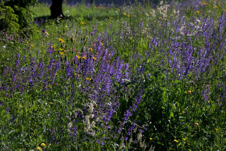 Talajjelző növények: Vajon kerted talaja meszes vagy savanyú?
