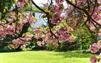 7 kis termetű fa, ami nem borítja árnyékba kertedet (képekkel)