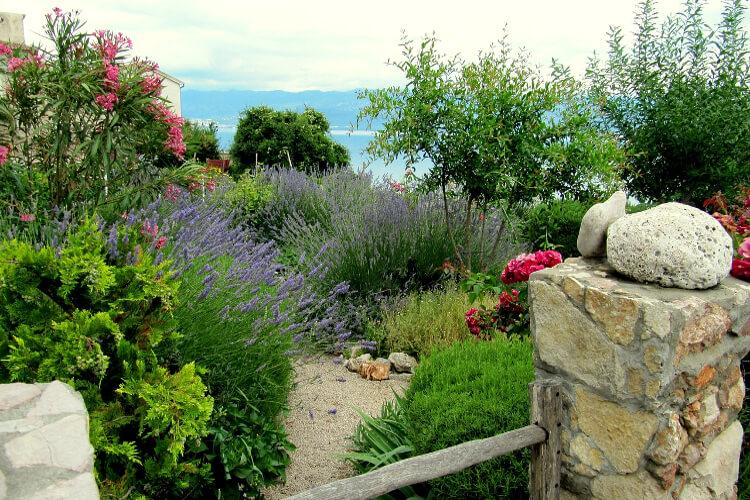 Mediterrán kert növényei: A 33 legjellegzetesebb (itthon kapható) fajta