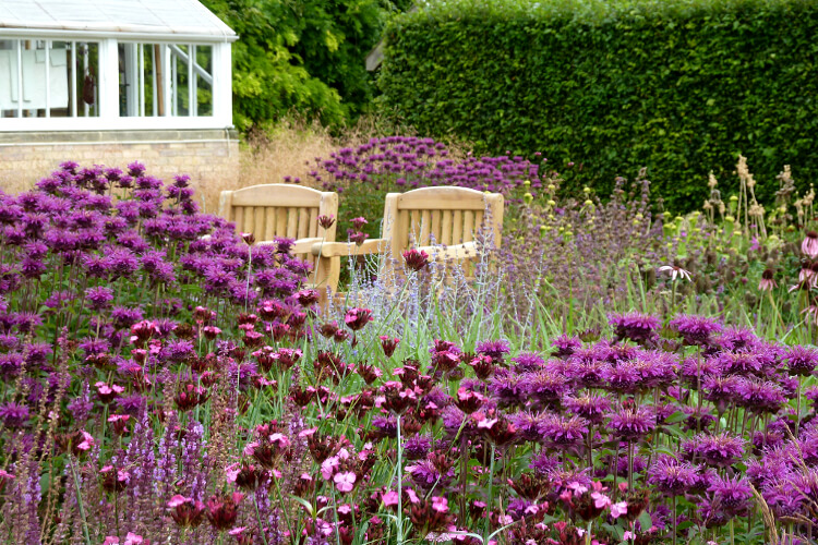 lila növények
