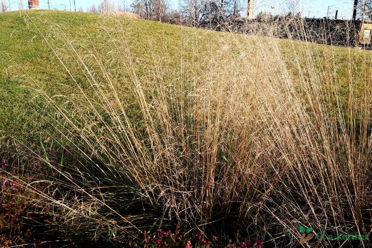 télen díszítő növények