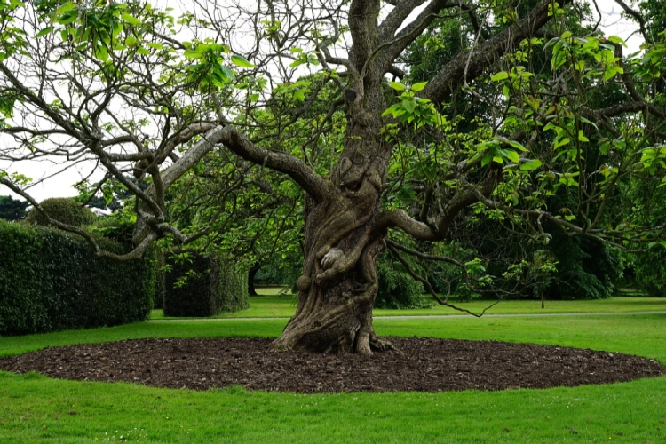 fák törzsének védelme