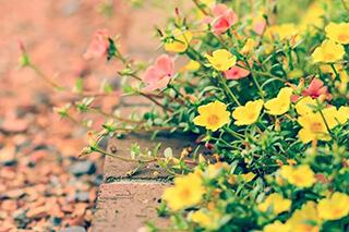 kerti szegély használata