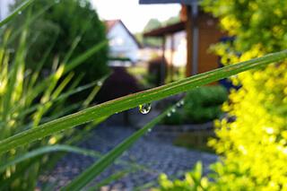 szárazságtűrő kert titka