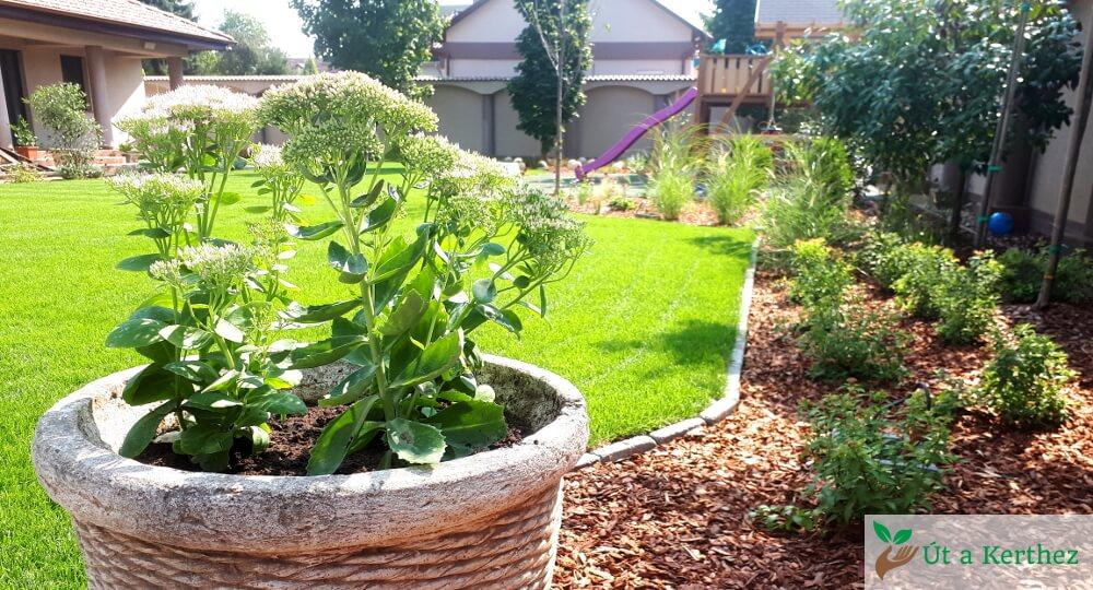 kaspós növény a kertben